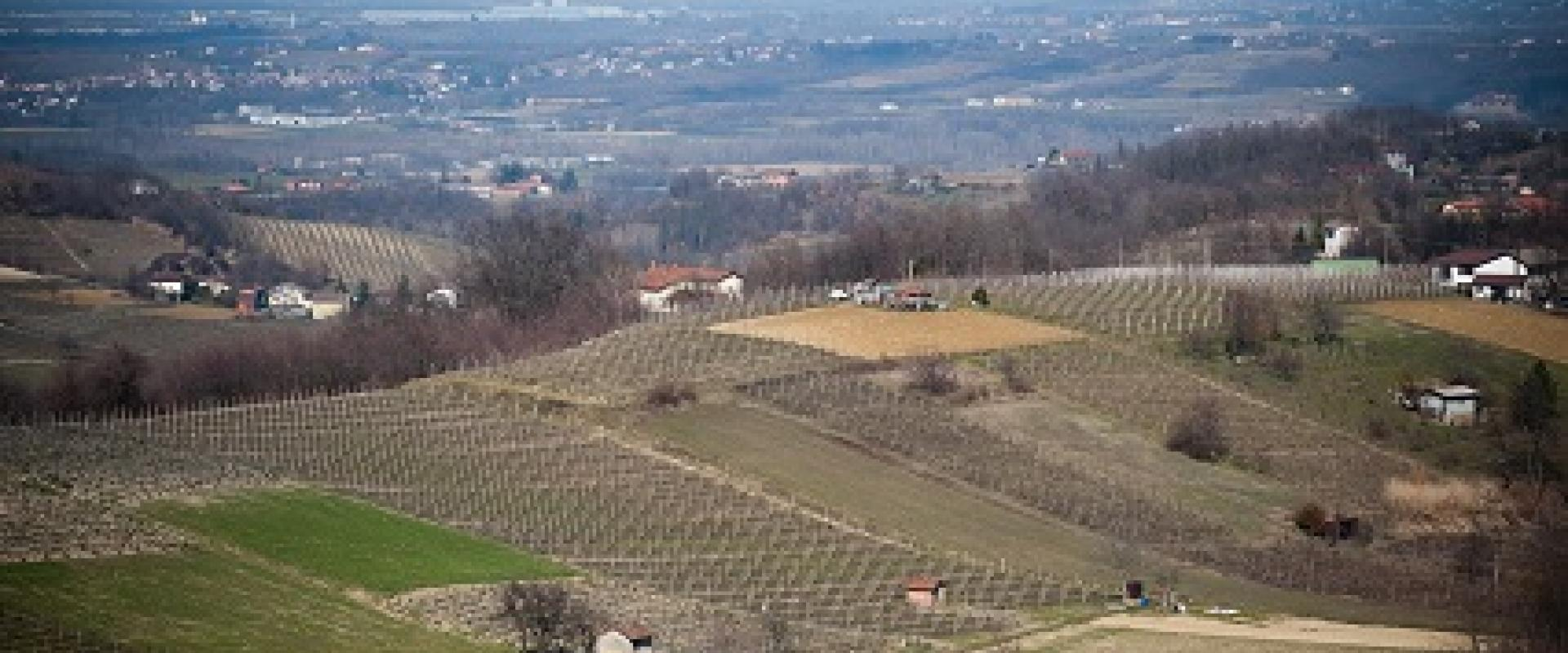 ovada dolcetto vineyards